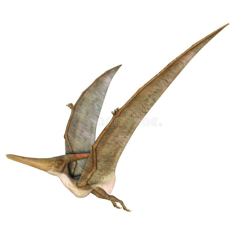 Pteranodon διανυσματική απεικόνιση
