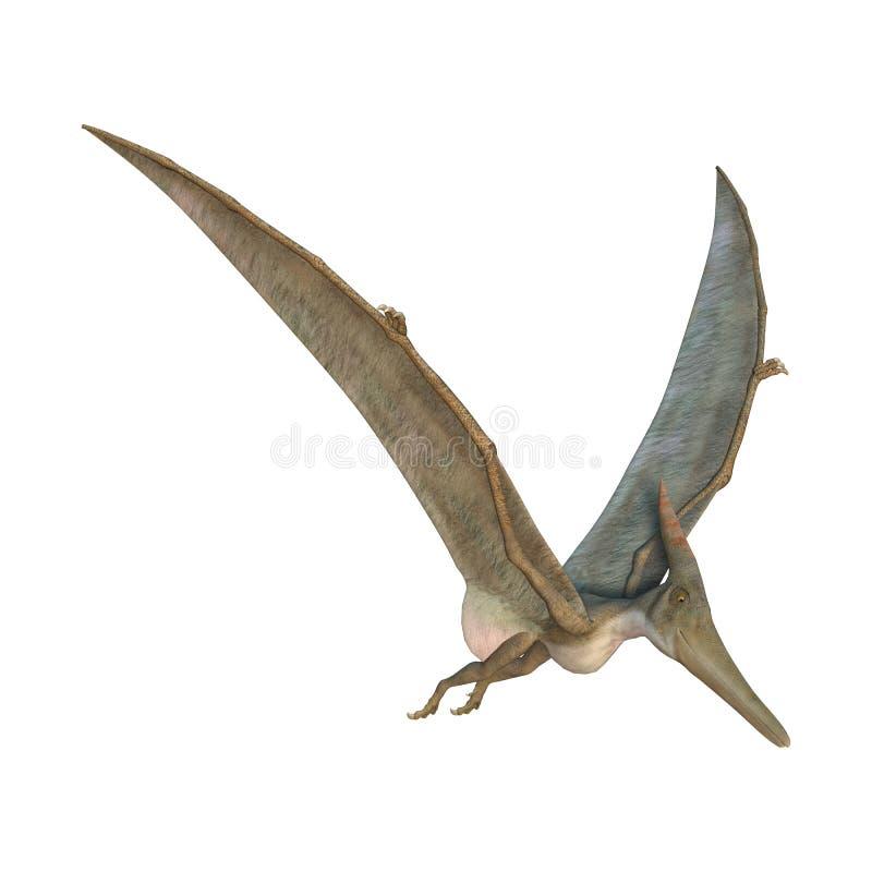 Pteranodon illustration libre de droits