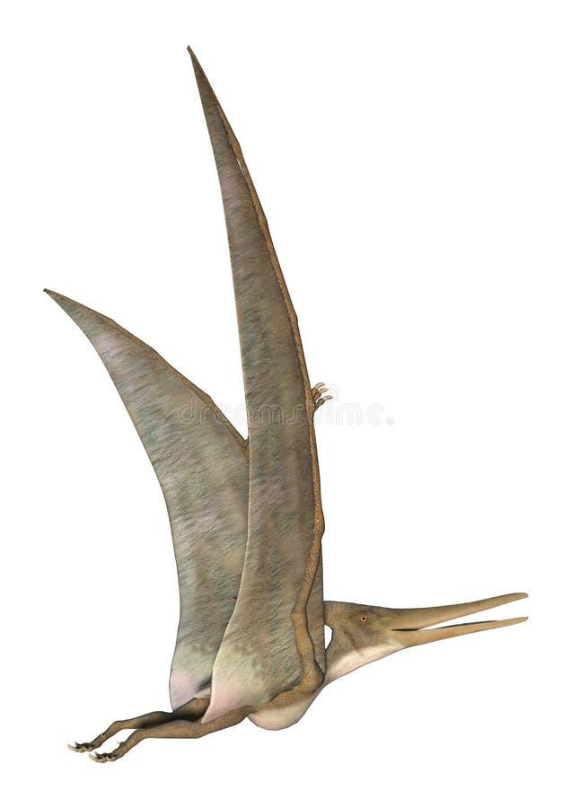 Pteranodon illustration de vecteur