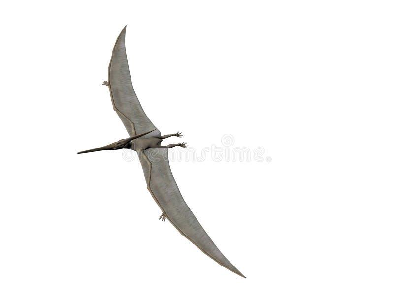 Pteranodon ilustração do vetor