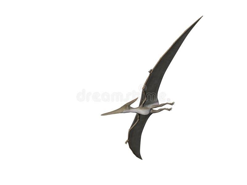 pteranodon απεικόνιση αποθεμάτων