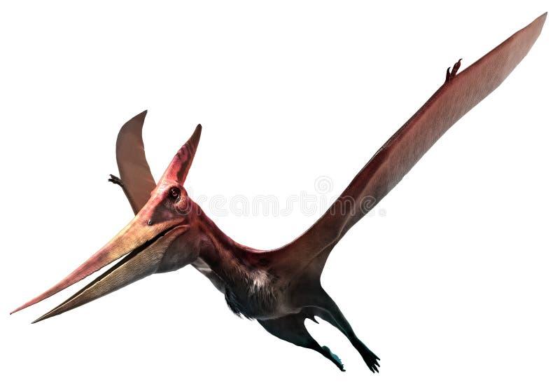 Pteranodon ilustração royalty free