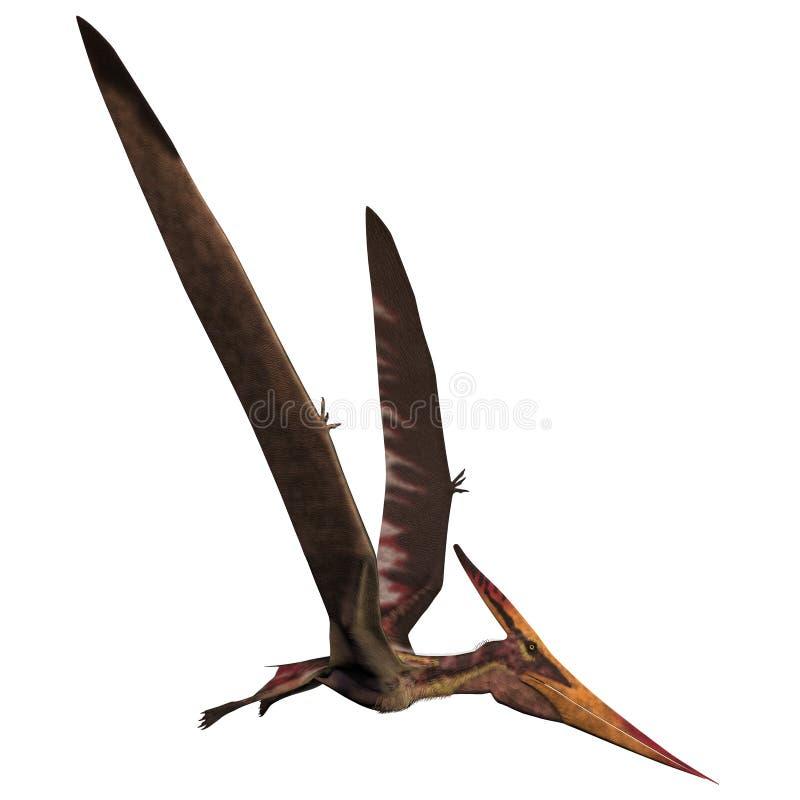 Pteranodon sur le blanc illustration stock