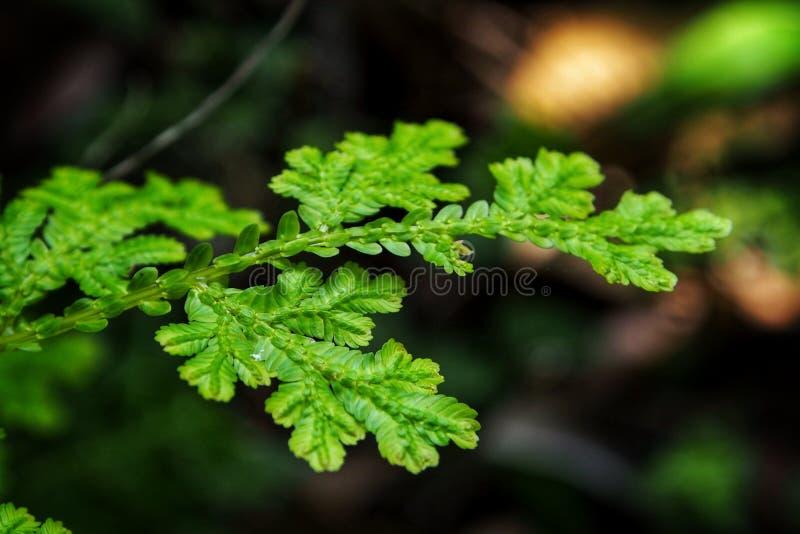 Pteridophyta стоковые фото
