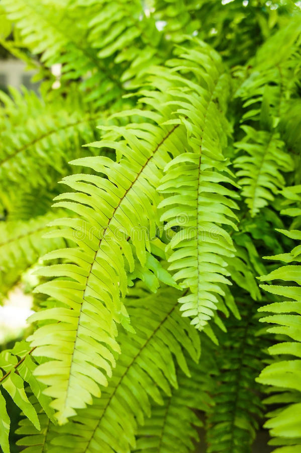 Free Pteridophyta Stock Photos - 41767953