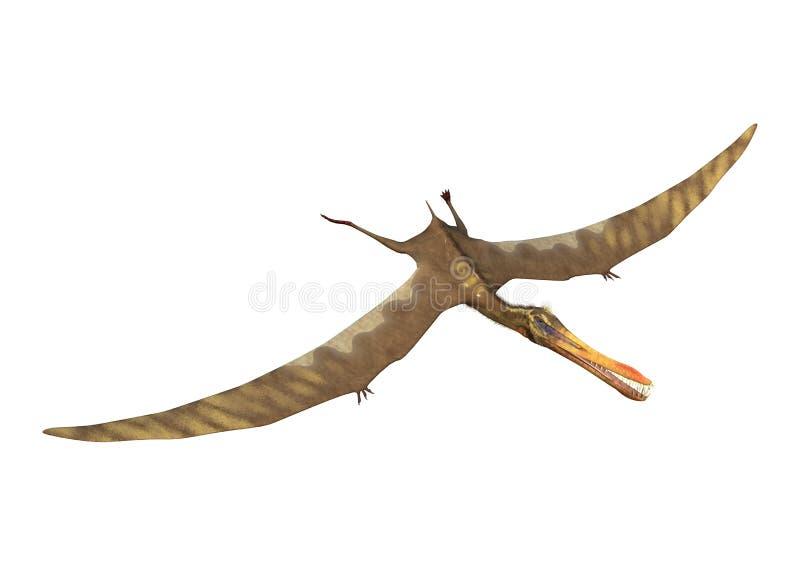 pterodátilo Anhanguera da rendição 3D no branco ilustração royalty free