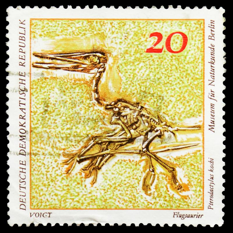 Pterodactylus kochi, Fossils in Berlin Natural History Museum Palaeontological serie, circa 1973. MOSCOW, RUSSIA - FEBRUARY 22, 2019: A stamp printed in Germany stock image