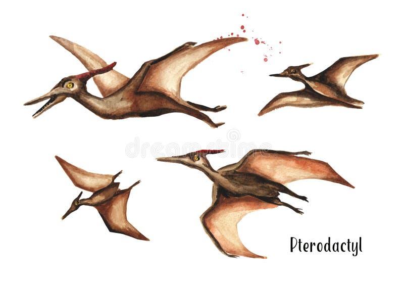 Pterodactylusdinosaurus Waterverfhand getrokken die illustratie, op witte achtergrond wordt geïsoleerd stock illustratie