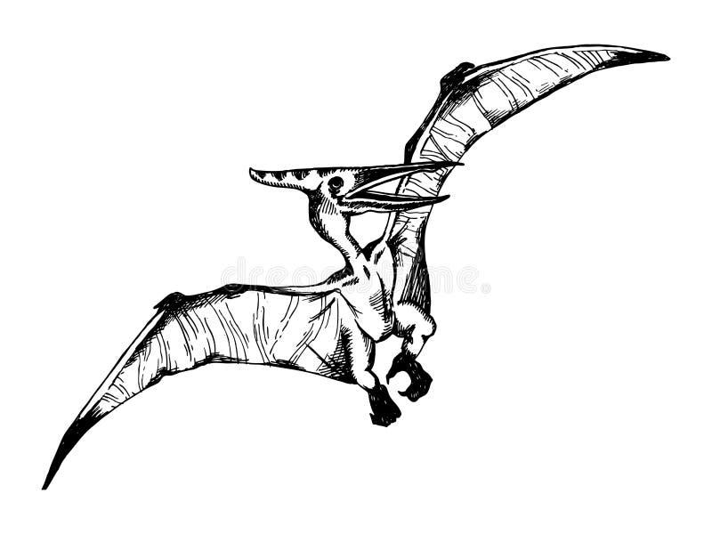 Pterodaktyla rytownictwa wektoru ilustracja ilustracji