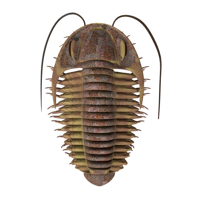Ptychoparia τριλοβιτών διανυσματική απεικόνιση