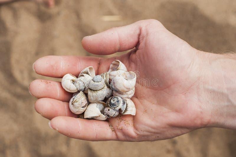 Puñado de conchas marinas en el fondo de una playa arenosa Detalles de vacaciones de verano foto de archivo libre de regalías