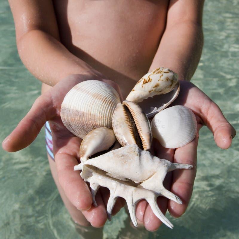 Puñado de conchas marinas - Fiji - South Pacific imágenes de archivo libres de regalías