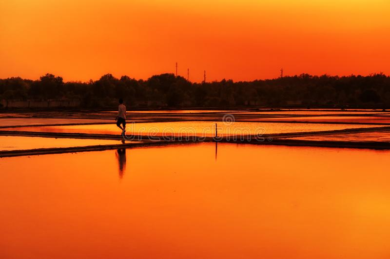 Può Gio Rice Paddy Sunset South Vietnam immagini stock