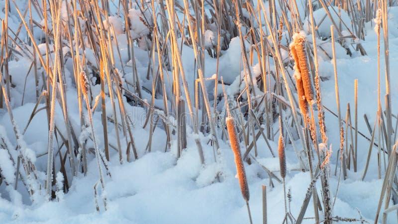 Può ritenere il freddo estremo di mattina fotografie stock