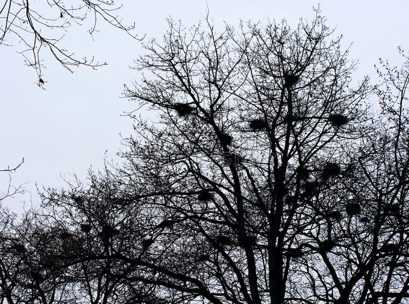 Puści ptaków gniazdeczka zdjęcia royalty free
