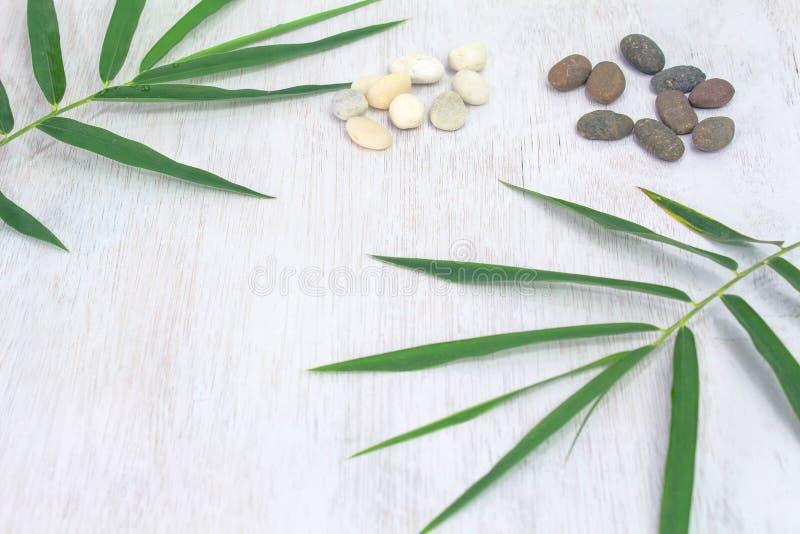 Puści whiteboard i zieleni liście umieszczający na białym tle Kopia Umieszczająca, przestrzeń dla teksta fotografia royalty free