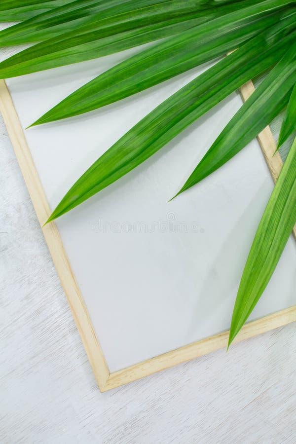 Puści whiteboard i zieleni liście umieszczający na białym tle Kopia Umieszczająca, przestrzeń dla teksta obrazy royalty free