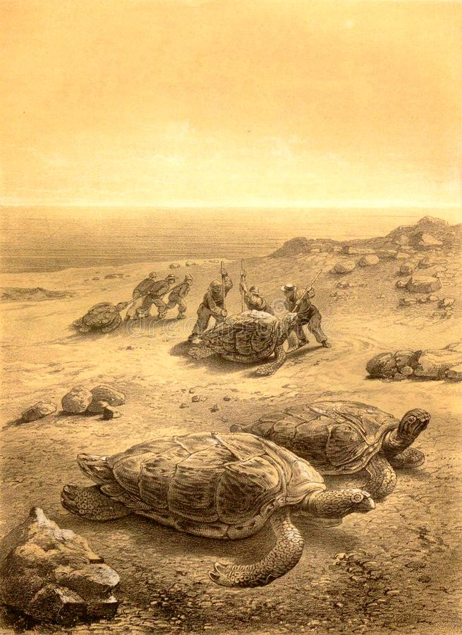 Hunting for sea turtles. stock illustration