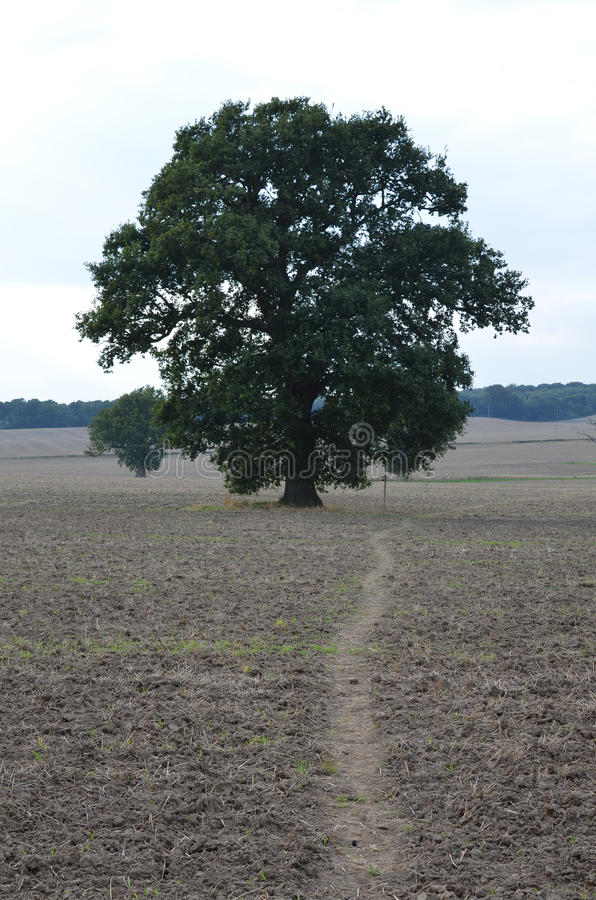 Public footpath through the English countryside. royalty free stock photography