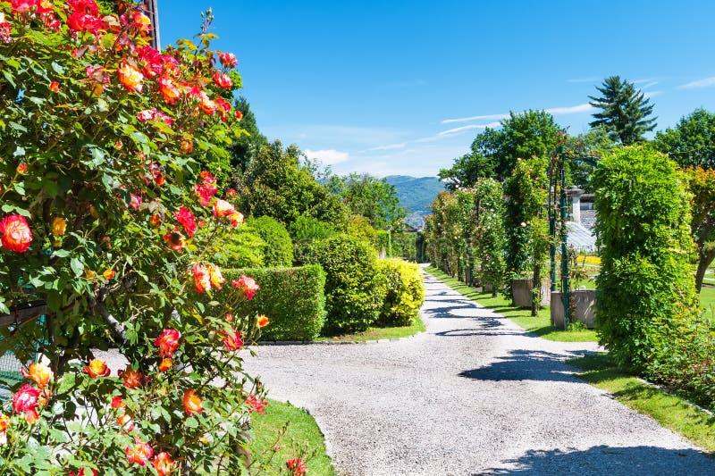 Public garden of Villa Taranto in Italy. Piece of public gardens of Villa Taranto, Italy stock photo