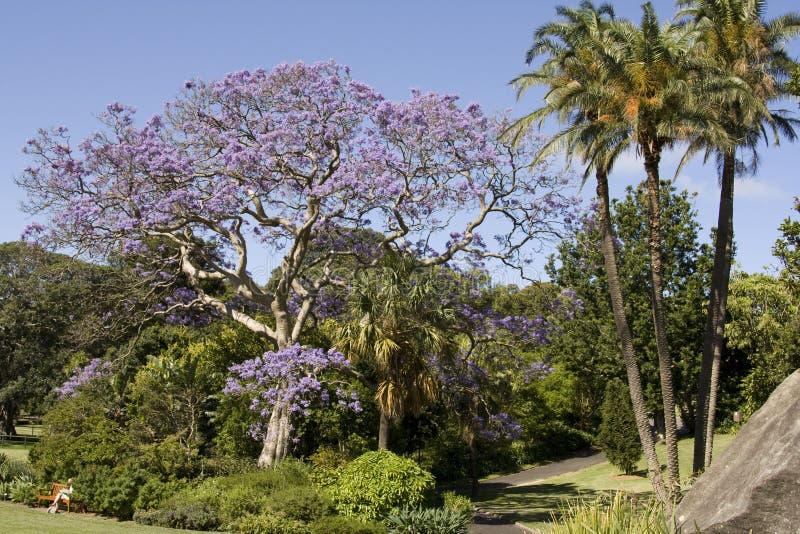 Download Public Gardens stock photo. Image of senior, public, people - 12633244