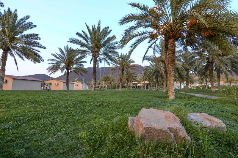 A public park in Hail, Saudi Arabia. It has mountains, palm trees with grass ground. Fine sky at the background with stone in foreground. There are also tents stock images