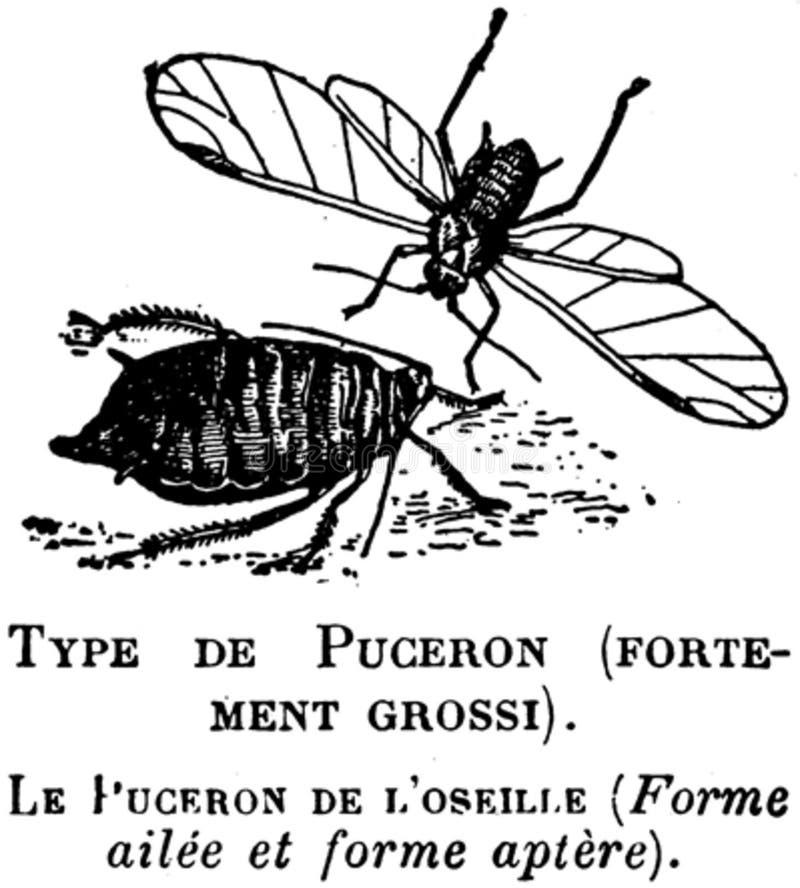Puceron-2-oa Free Public Domain Cc0 Image