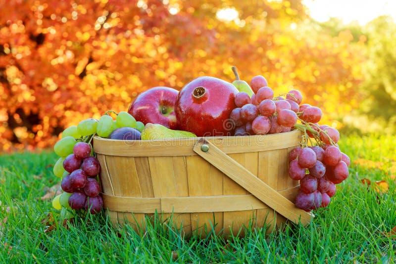 Puchar dziękczynień jabłek bonkret owocowi granatowowie obraz stock