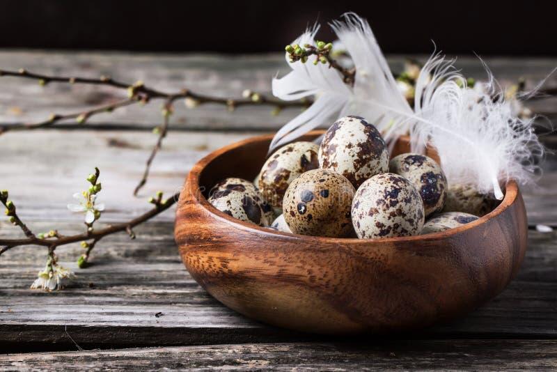 Puchar przepiórek jajka z okwitnięcie gałąź obraz stock