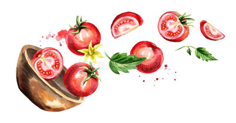 Puchar z dojrzałymi czerwonymi pomidorami Wręcza patroszoną horyzontalną akwareli ilustrację, odizolowywającą na białym tle royalty ilustracja