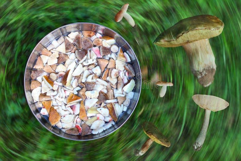 Puchar z kawałkami jadalna jesień ono rozrasta się, zielonej trawy backgro zdjęcie stock