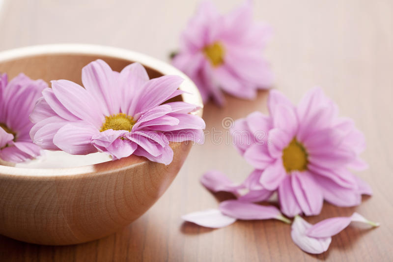 pucharu kwiatów menchie zdjęcie stock