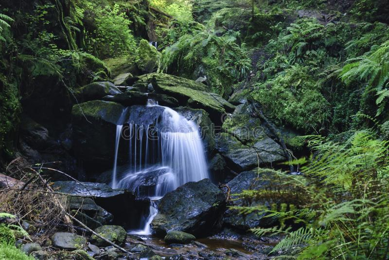 Pucks Glen Waterfall. A waterfall in the magical Pucks Glen walk, in Argyll Forest Park, near Dunoon, on the Cowal peninsula, Argyll and Bute, Scotland. 10 royalty free stock photography