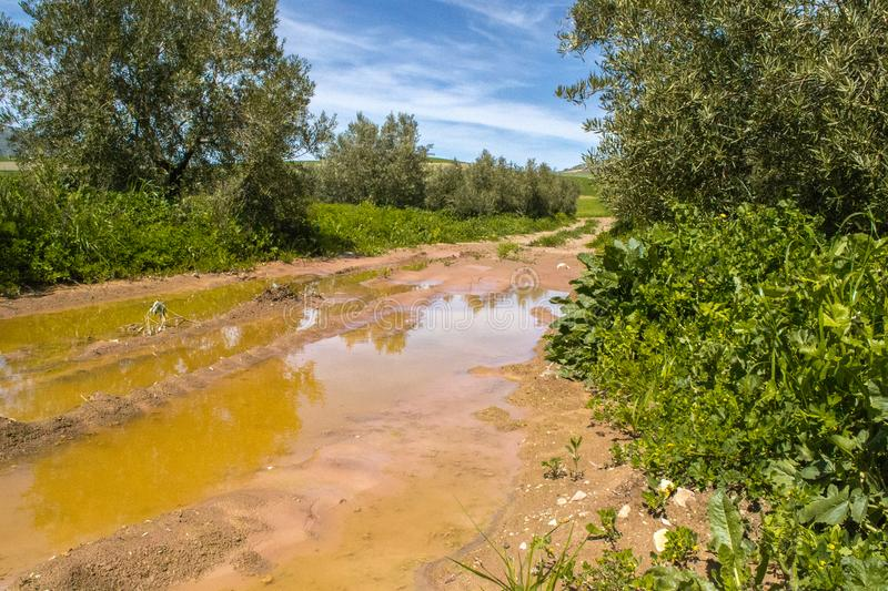 Pud muddle after the rain in agriculture fields. With trees royalty free stock photo