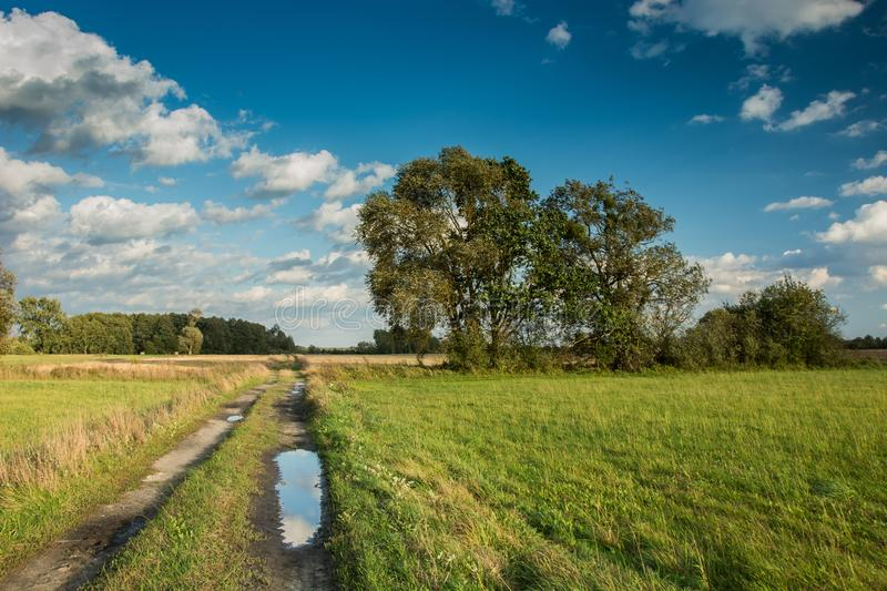A puddle on a dirt road through a green meadow and tall trees, white clouds on a blue sky. Summer view royalty free stock image