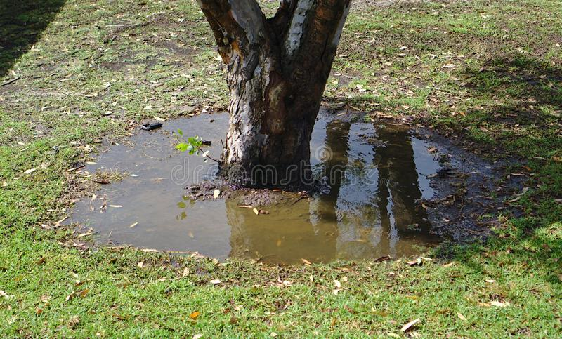 Puddle of dirty water under tree stock photography