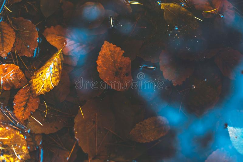 Puddle in a forest with autumn leaves. Top view stock image