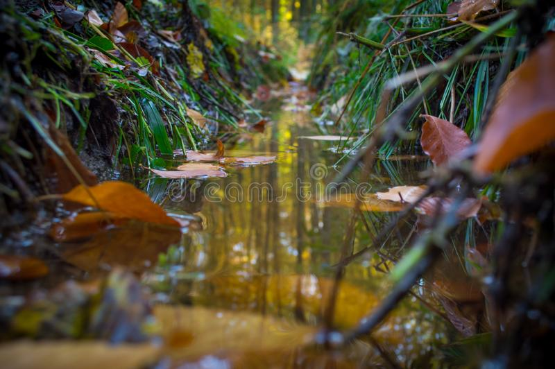 Puddle in the forest stock photo