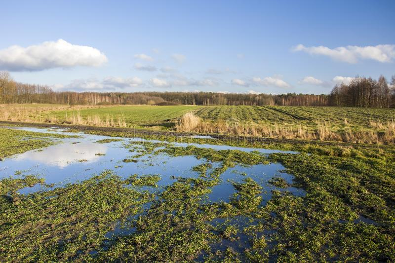 Puddle on the green field and forest stock images
