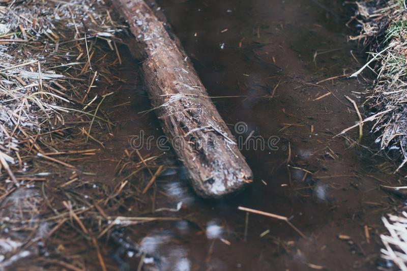 Puddle. A stick in a muddy puddle reflecting light on tbe floor of a pine forest stock photo