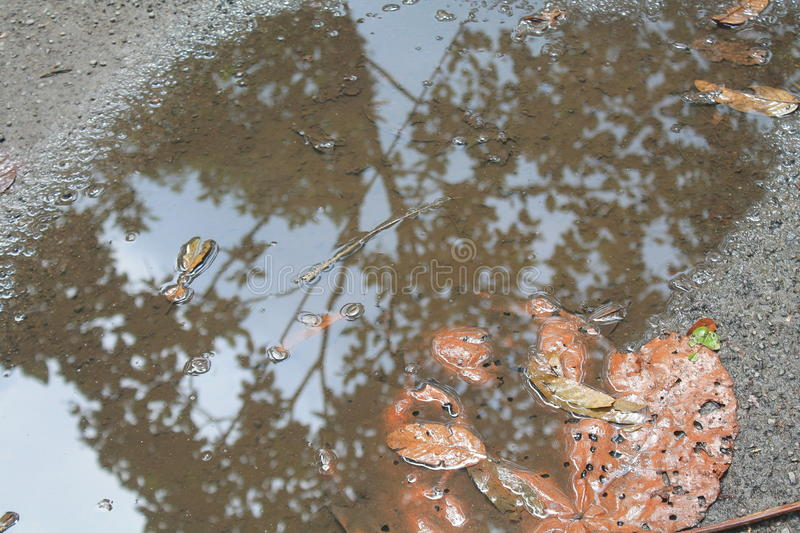 Puddle royalty free stock photos