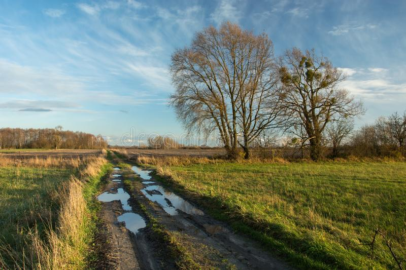 Puddles on a dirt road through fields, tall trees without leaves and clouds on a blue sky. Puddles on a dirt road through fields, tall trees without leaves and royalty free stock image