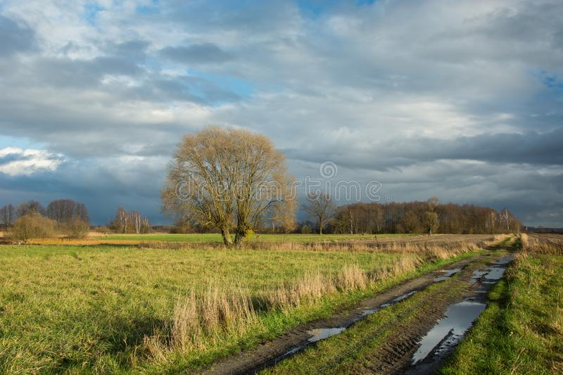 Puddles on dirt road through fields, willow tree without leaves, forest and rainy clouds. Puddles on dirt road through fields, willow tree without leaves and royalty free stock photo