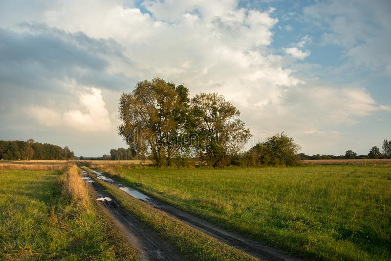 Puddles on a dirt road through meadows, trees and evening clouds. On the sky royalty free stock photos