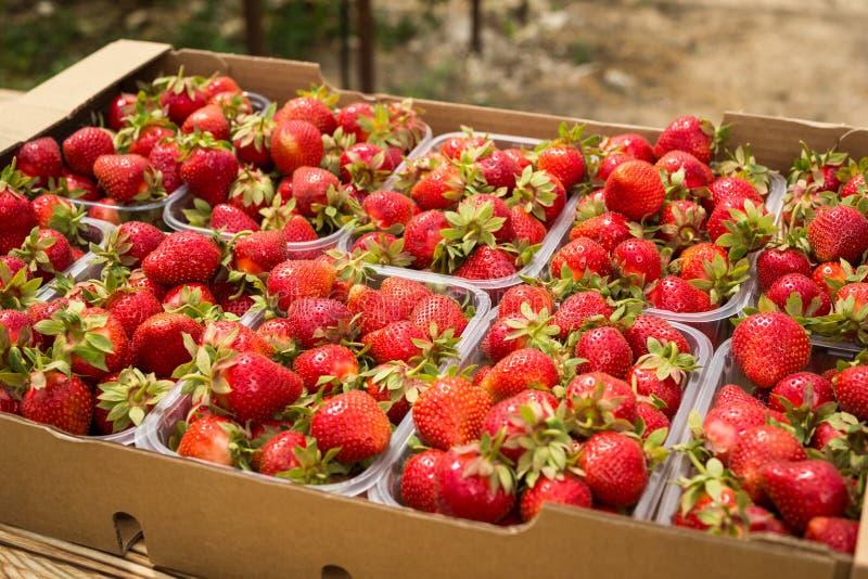 Pudełka truskawki w rolnika rynku Skrzynki pełno fragaria obraz stock