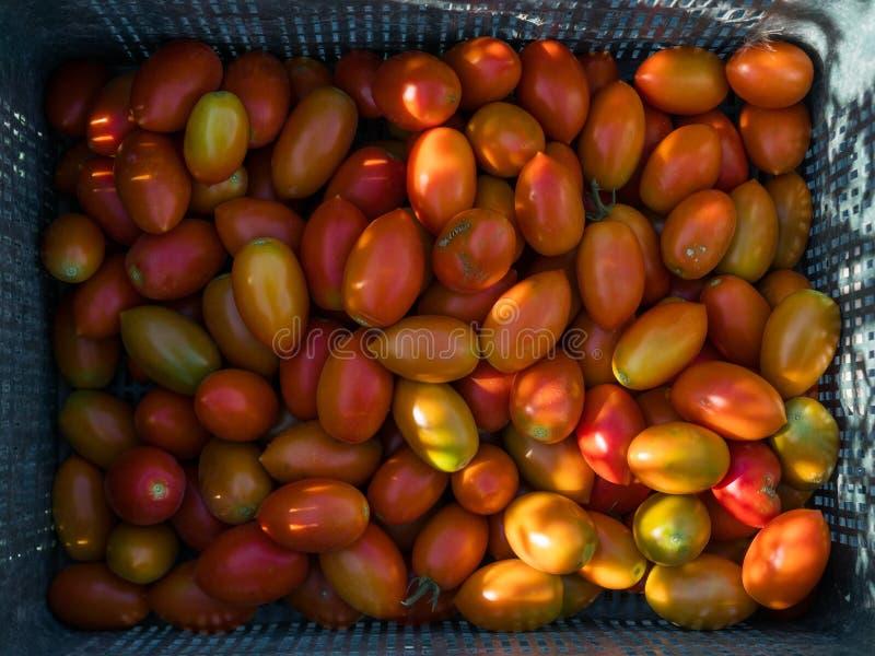 Pudełko świezi czerwoni pomidory obraz royalty free