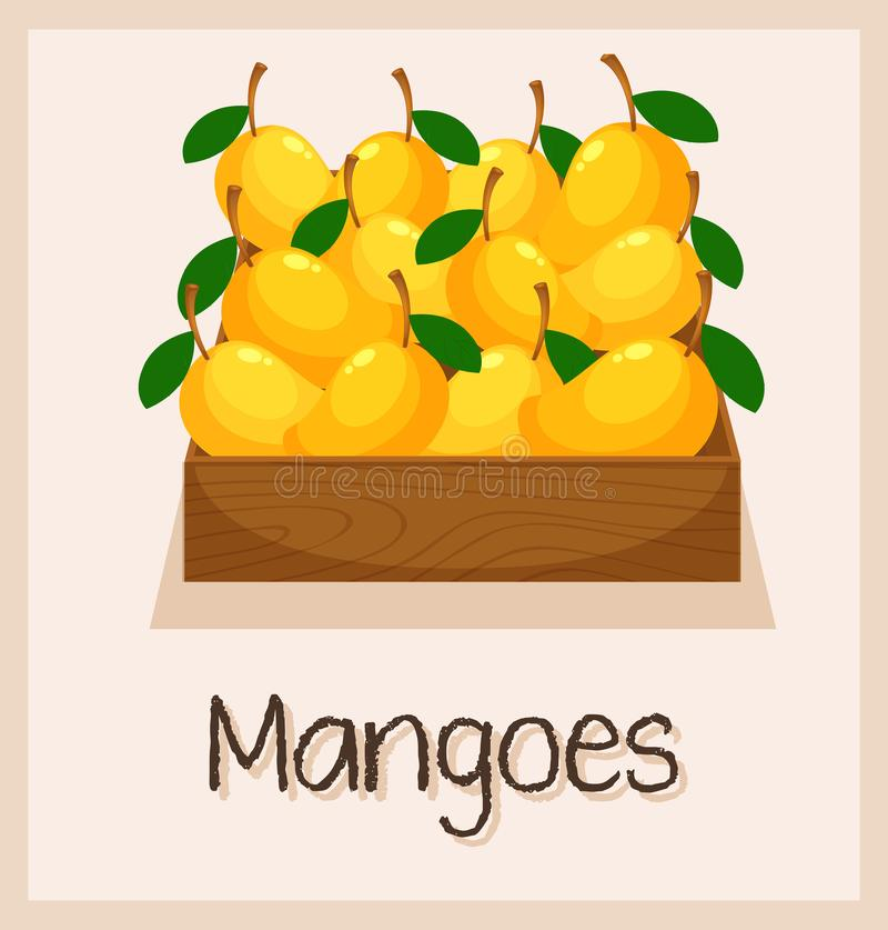 Pudełko pełno mango royalty ilustracja