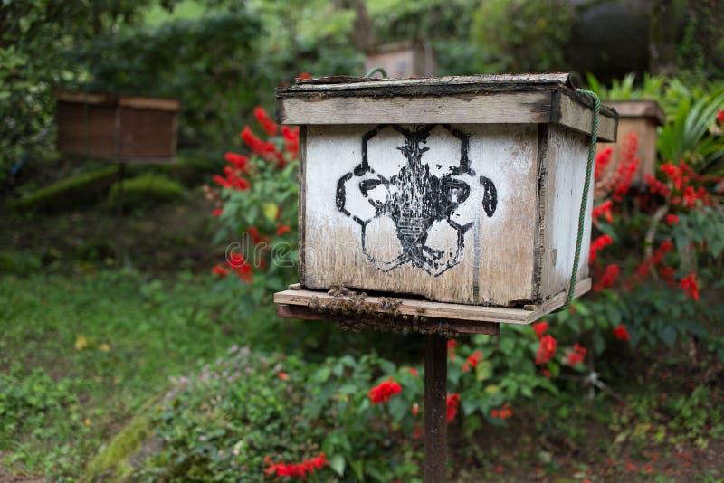 Pudełko pszczoła w gospodarstwie rolnym zdjęcie stock