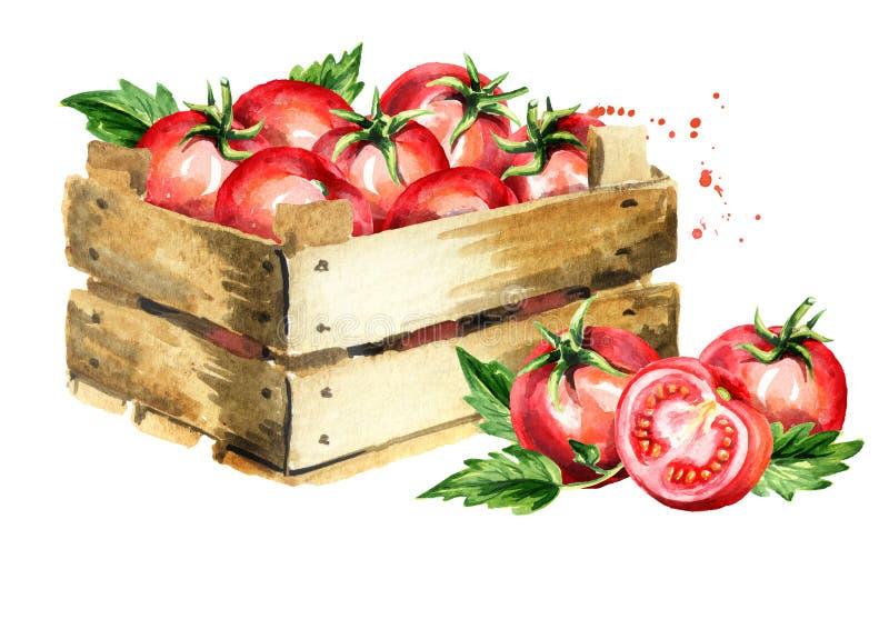 Pudełko z dojrzałymi czerwonymi pomidorami Akwareli ręka rysująca ilustracja, odizolowywająca na białym tle ilustracja wektor