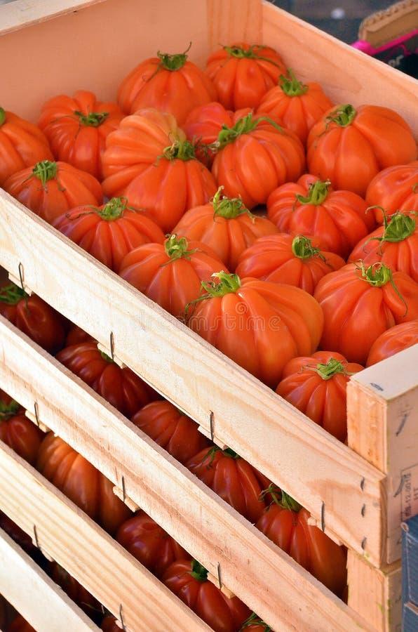 pudełkowatego zbiornika dojrzali pomidory zdjęcia stock